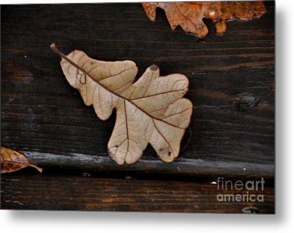The Leaves Metal Print