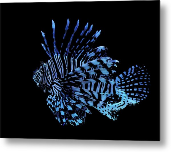 The Lionfish 3 Metal Print by Robin Cox
