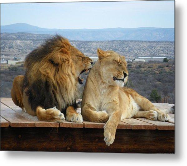 The Lions Metal Print by Olga Vlasenko