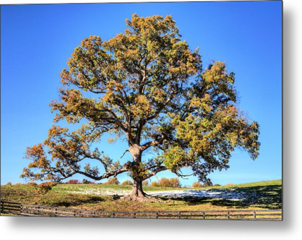 The Mighty Metal Print by JC Findley