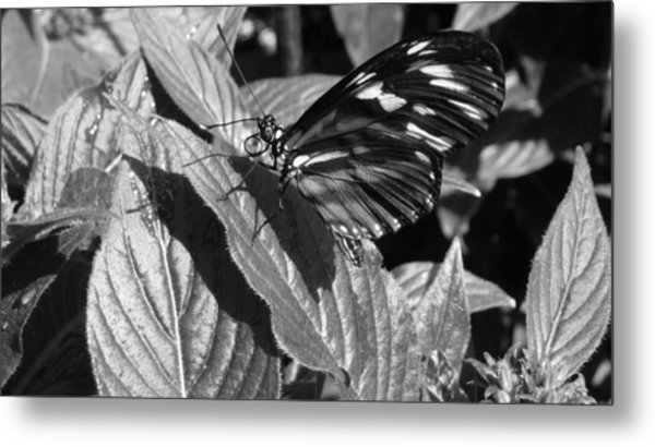 The Monarch Metal Print by Michael Carrothers
