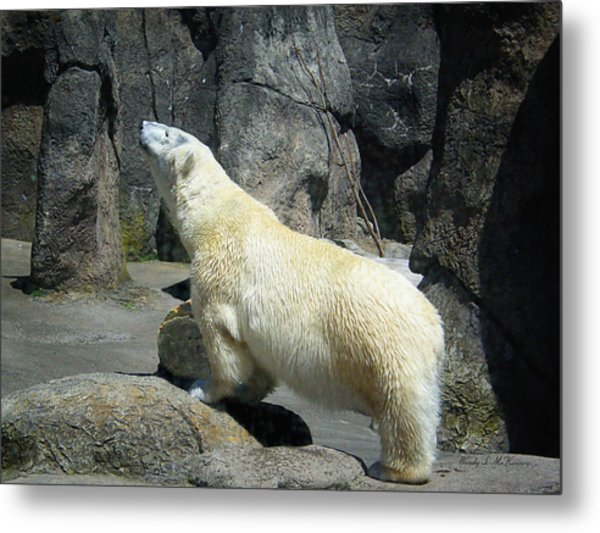 The Polar Pose Metal Print