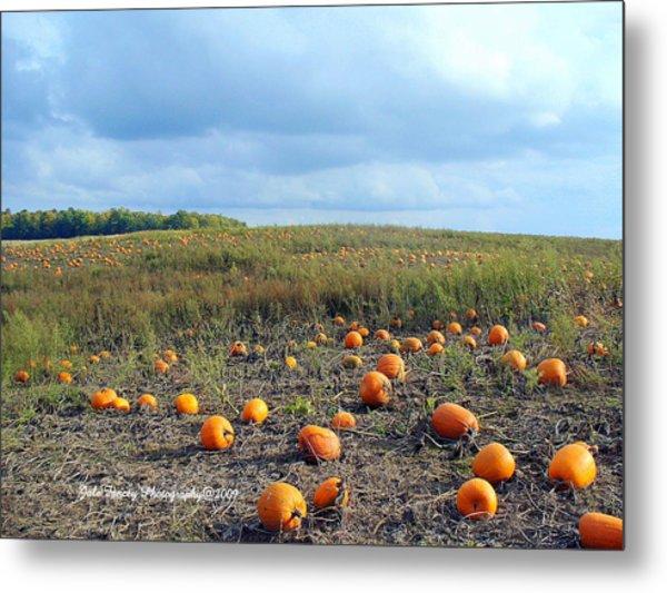 The Pumpkin Patch Metal Print