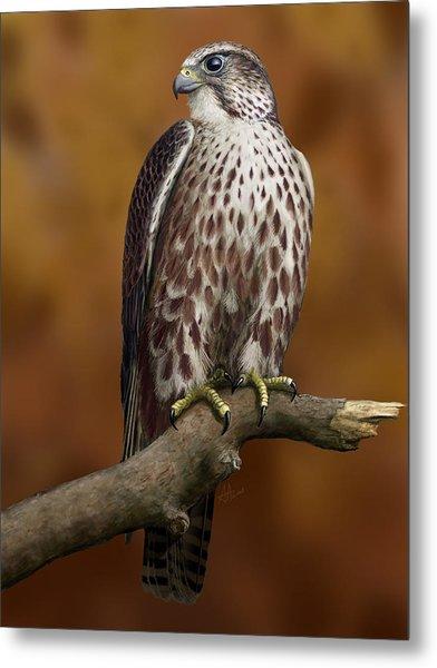 The Saker Falcon Metal Print by Deak Attila