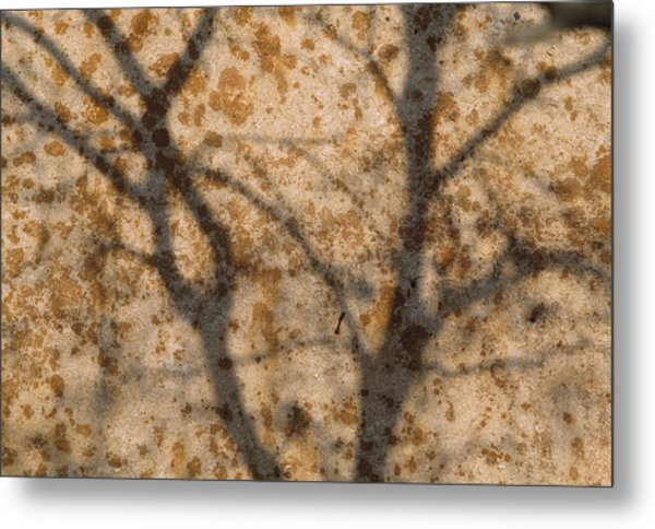 The Shadow Of Tree Branches Shaded Metal Print