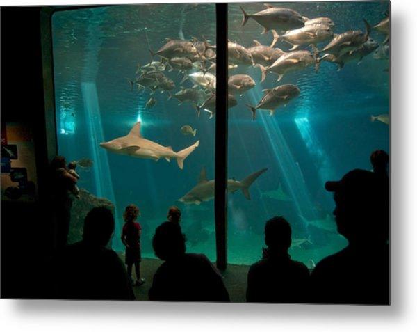 The Shark Tank Metal Print