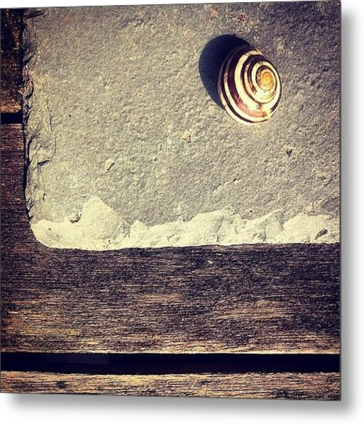 The Snail Metal Print