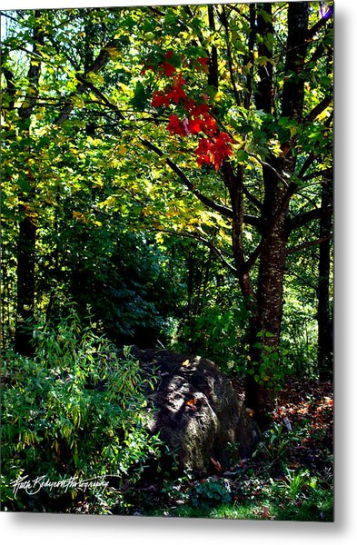 The Start Of Fall Color Metal Print by Ruth Bodycott