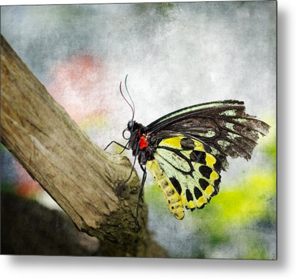 The Stillness Of A Butterfly Metal Print by Laura George