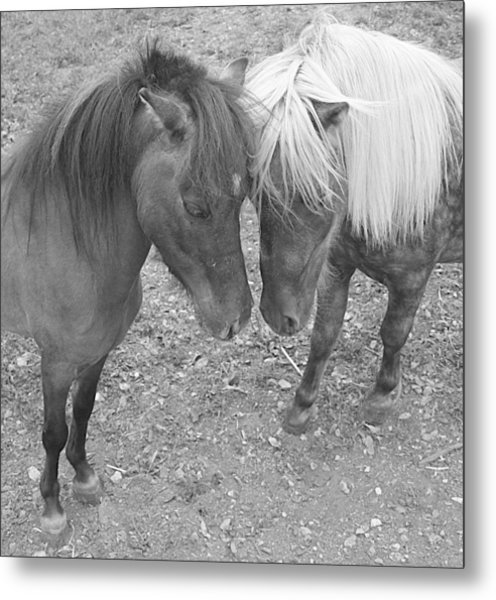 The Studs Metal Print by Heather  Boyd