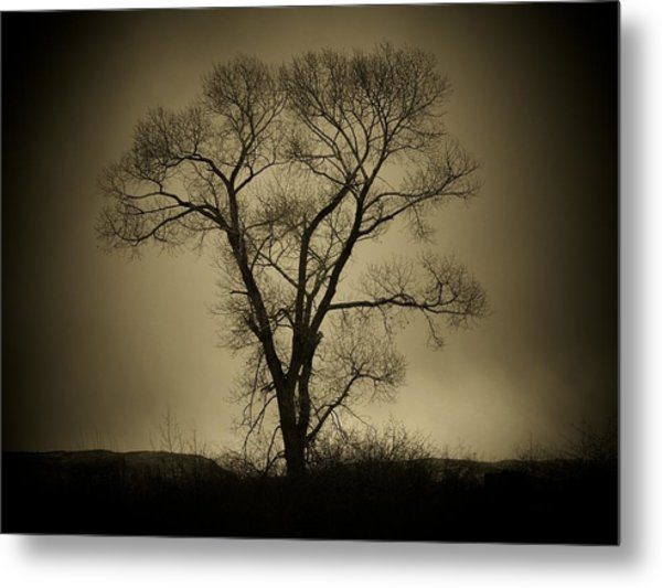 The Tree Metal Print by Big E Photography