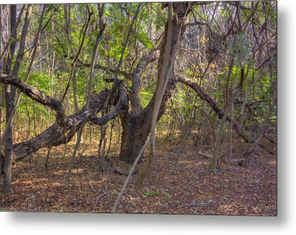 The Tree End Of Life Metal Print