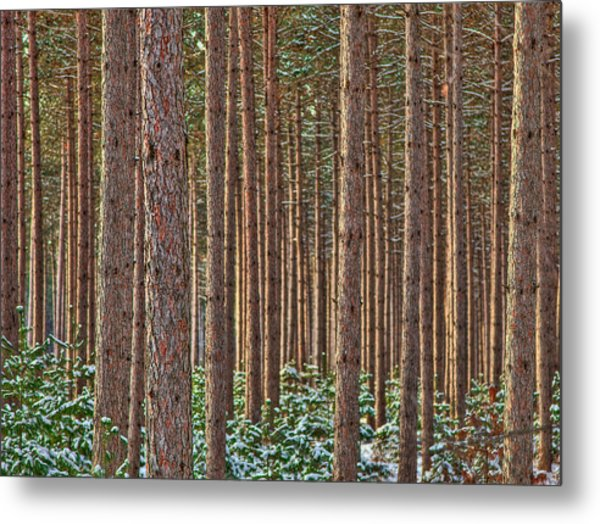 The Trees Metal Print