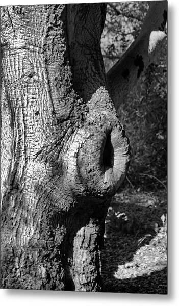The Trunk Metal Print