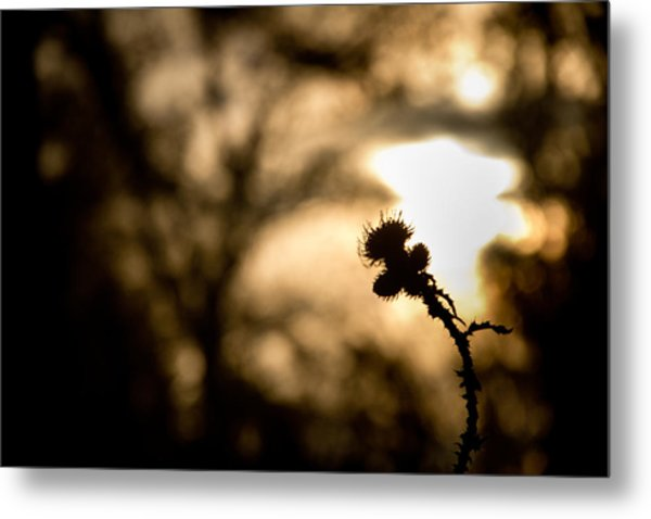 Thistle And Weeds Metal Print
