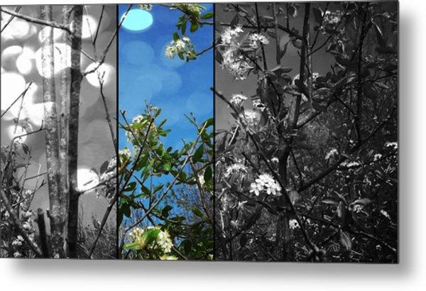 Through The Flowers Metal Print by Lee Yang