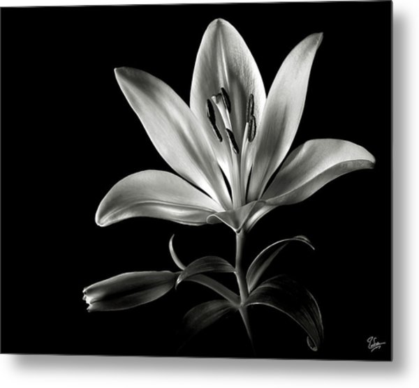 Tiger Lily In Black And White Metal Print