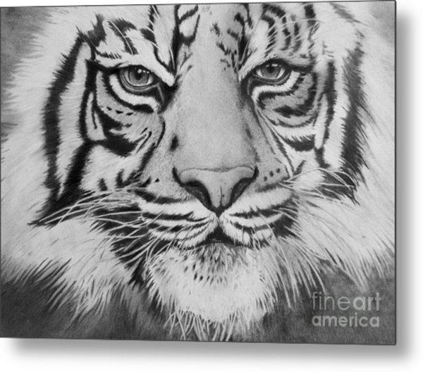 Tiger's Eyes Metal Print