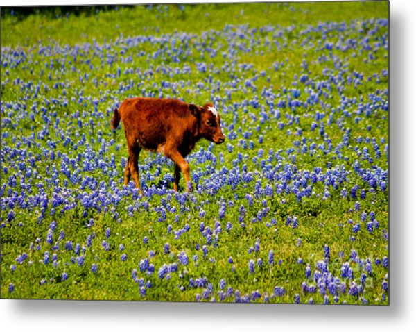 Tiptoe Through The... Metal Print by John Stanisich