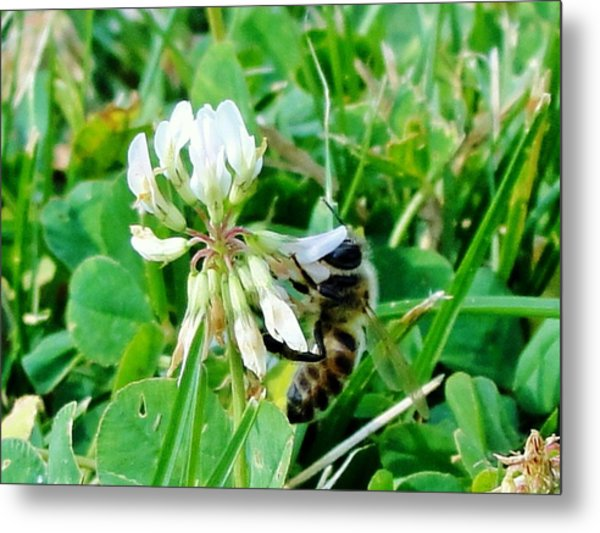To Stop And Smell A Flower Metal Print by Katie Bauer