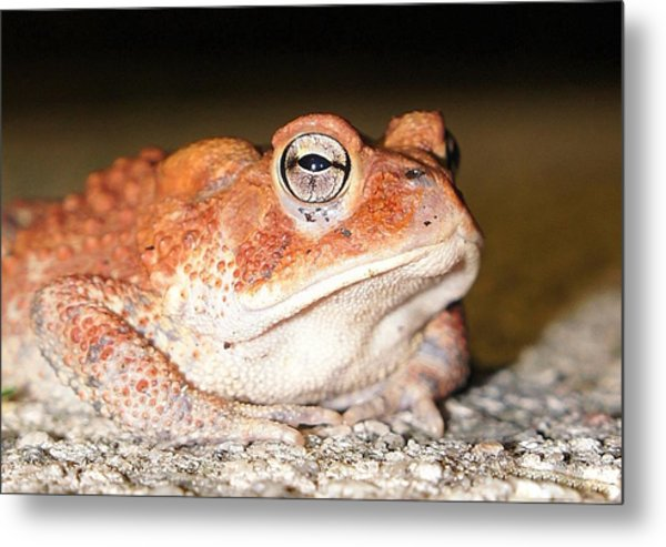 Toad You So Metal Print