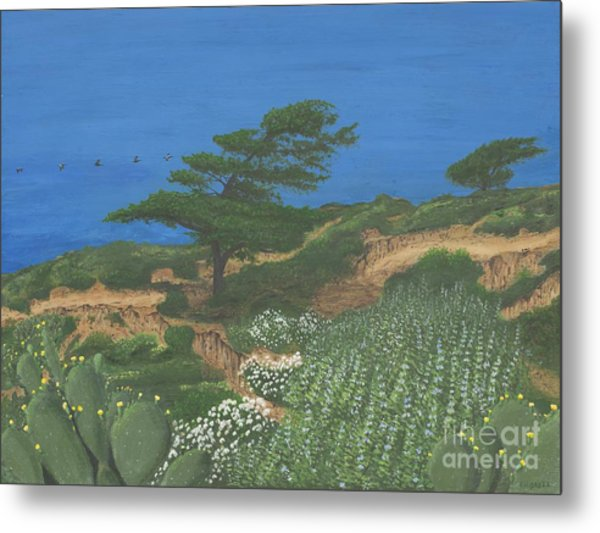 Torrey Pines And Pelicans Metal Print