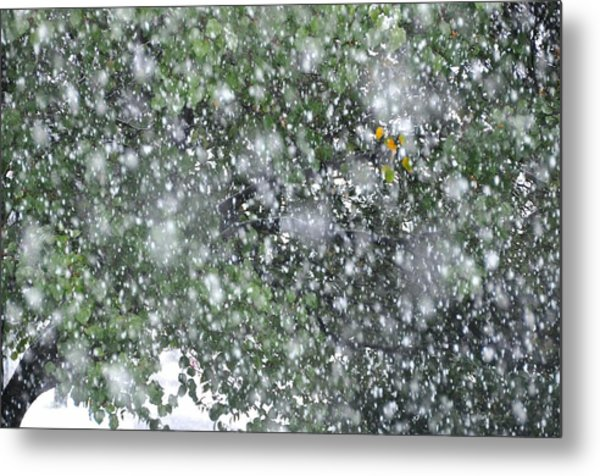 Touch Of Color Metal Print by JAMART Photography