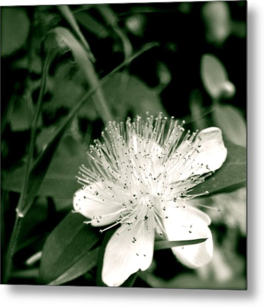 Metal Print featuring the photograph Touch by HweeYen Ong