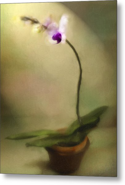 Toward The Light Metal Print by Jill Balsam