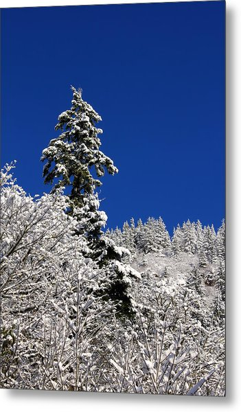 Towering Tree On Snow Covered Mountain Metal Print
