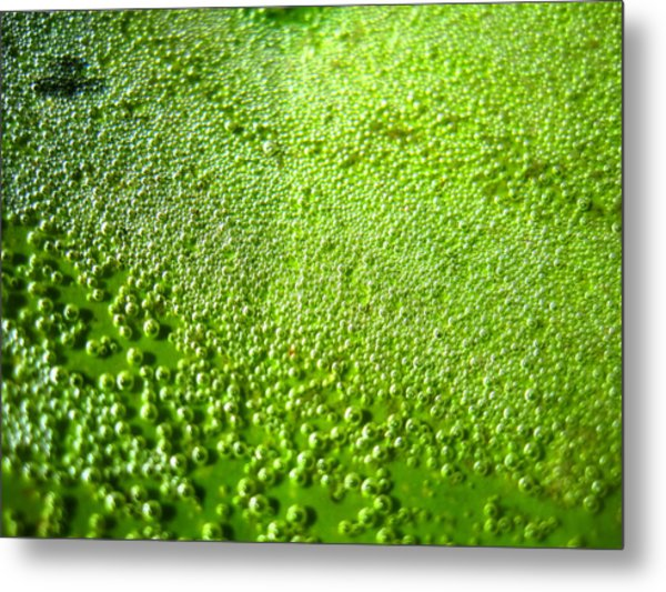 Trapped Air Bubbles Metal Print by Catherine Natalia  Roche