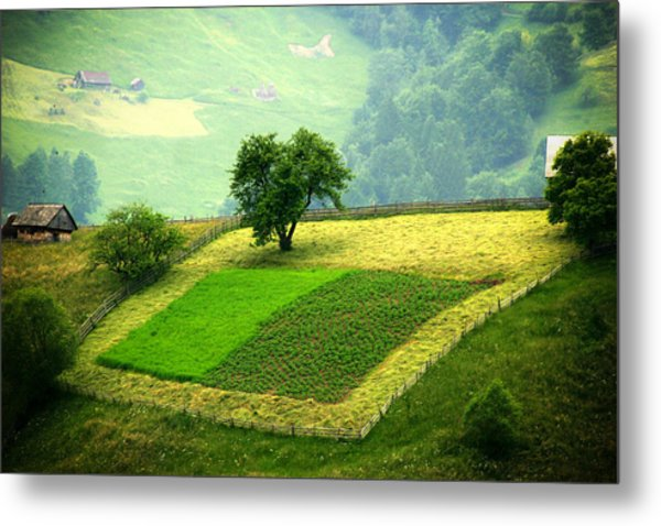 Tree And Field Metal Print
