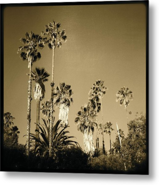 Tree Forest Metal Print by Ann Marie Donahue