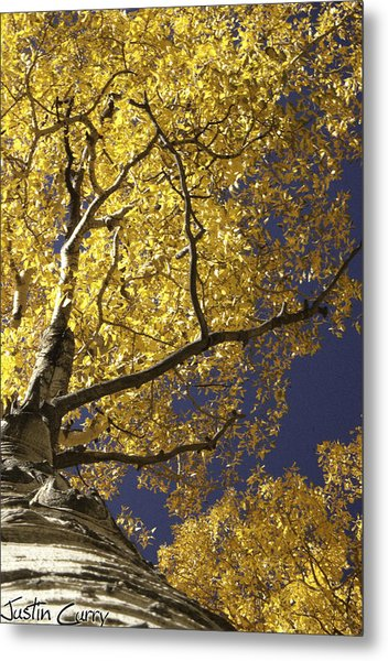 Tree Hugger Metal Print by Justin  Curry