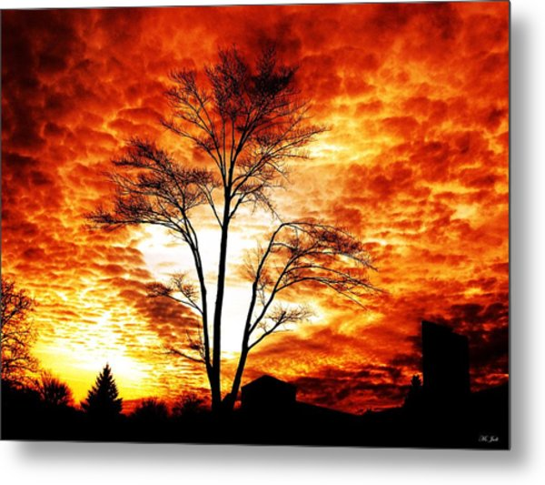 Tree Light Metal Print