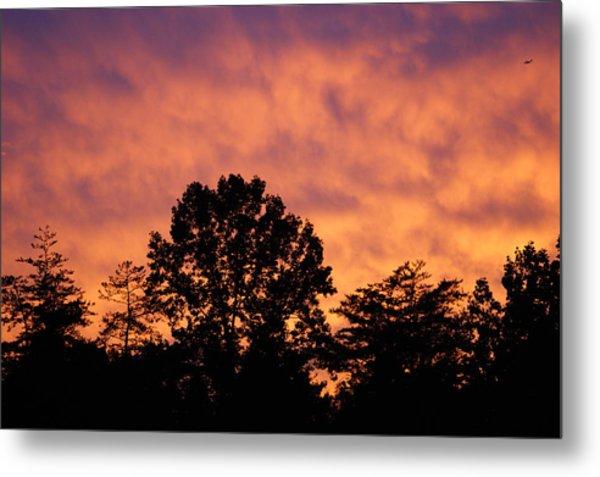 Tree Lined Skies Metal Print