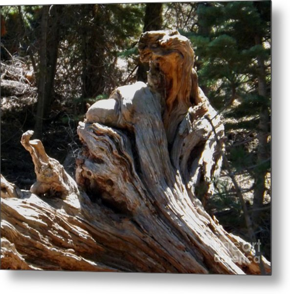 Tree Of Many Faces Metal Print by Gary Brandes