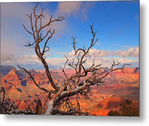 Tree Over Grand Canyon Metal Print