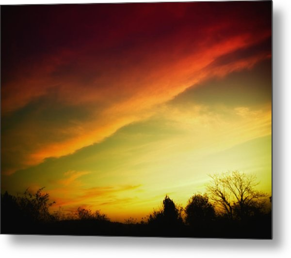 Tree-scape At Sunset  Metal Print