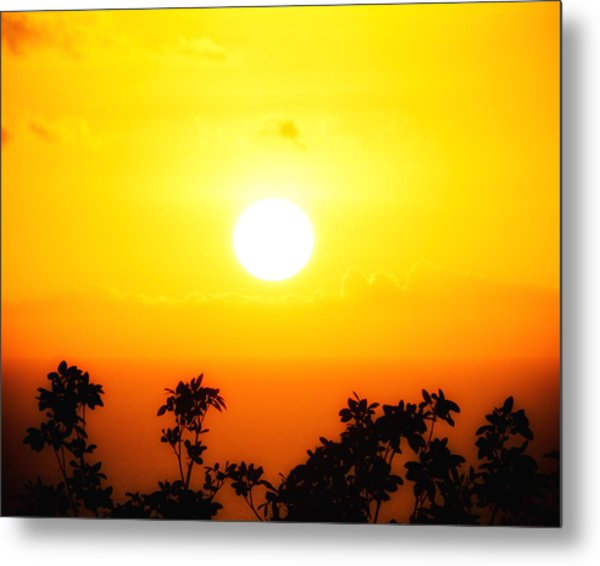 Tree-scape Sunset Metal Print