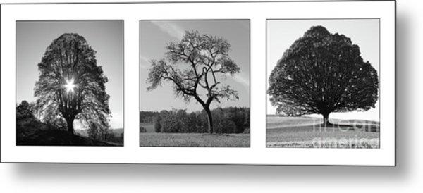 Trees On Canvas Metal Print by Bruno Santoro