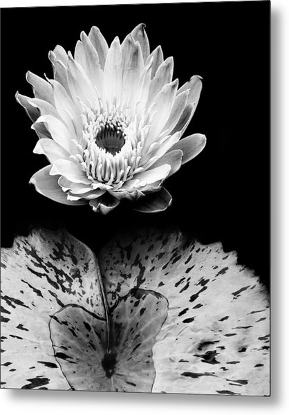 Tropical Water Lily In Black And White Metal Print