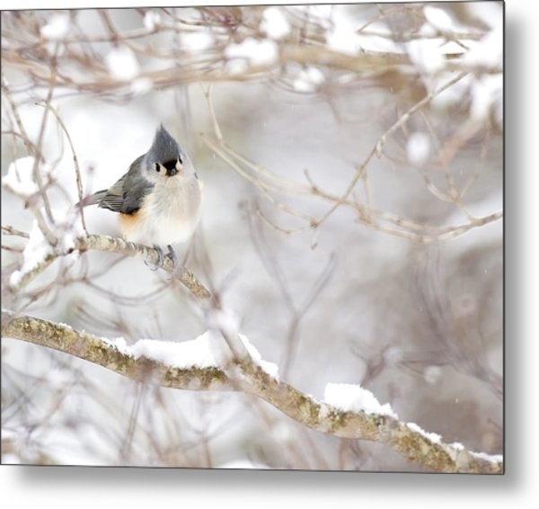 Tufted Titmouse In Snow Metal Print