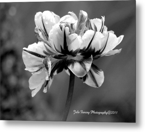 Tulip In Black And White Metal Print