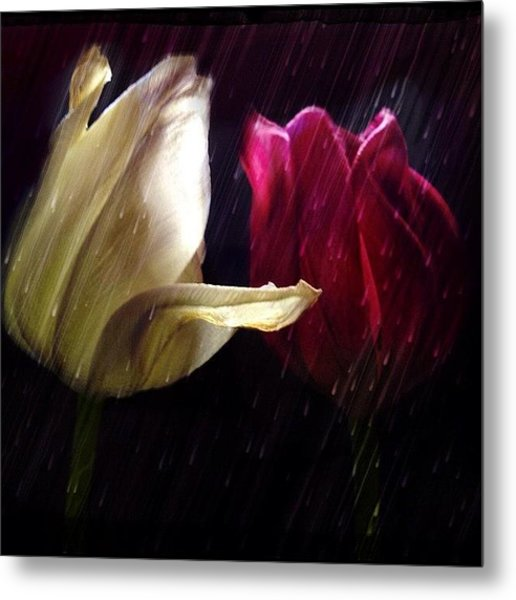 Tulips In The Rain Metal Print
