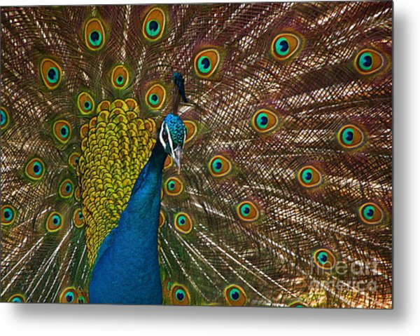 Turquoise And Gold Wonder Metal Print