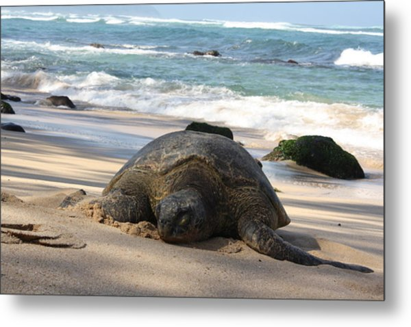 Turtle Beach Metal Print by Natalija Wortman
