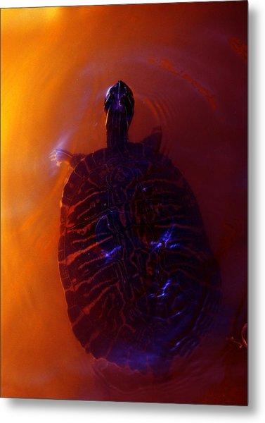 Turtle In Florida  Metal Print