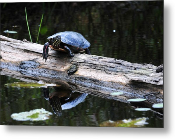 Turtle Reflected Metal Print
