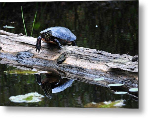 Turtle Reflected Metal Print